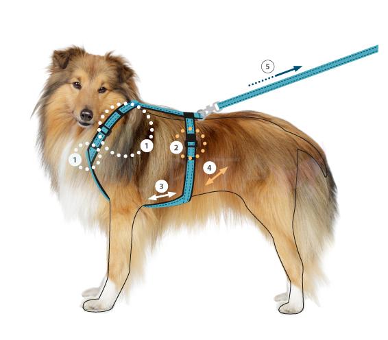 Hund annyx Passformcheck
