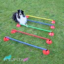 Hundetraining & Sport