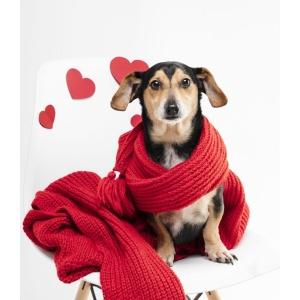 Hundefutter - hochwertig & preiswert