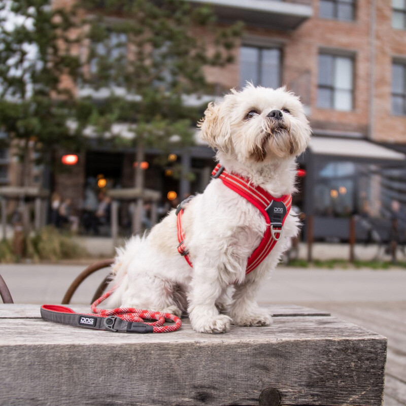 DOG Copenhagen Walk Harness  AIR Geschirr rot Classic Red V2