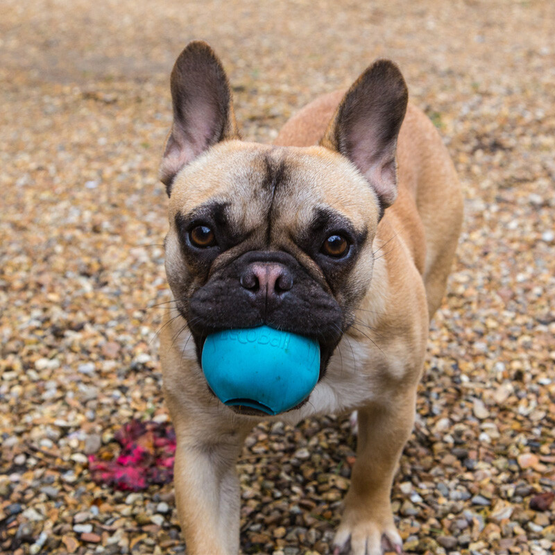 BecoPets Snackspielzeug Beco Ball  pink L